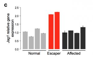 Gráfico que retrata a atividade do gene Jagged1