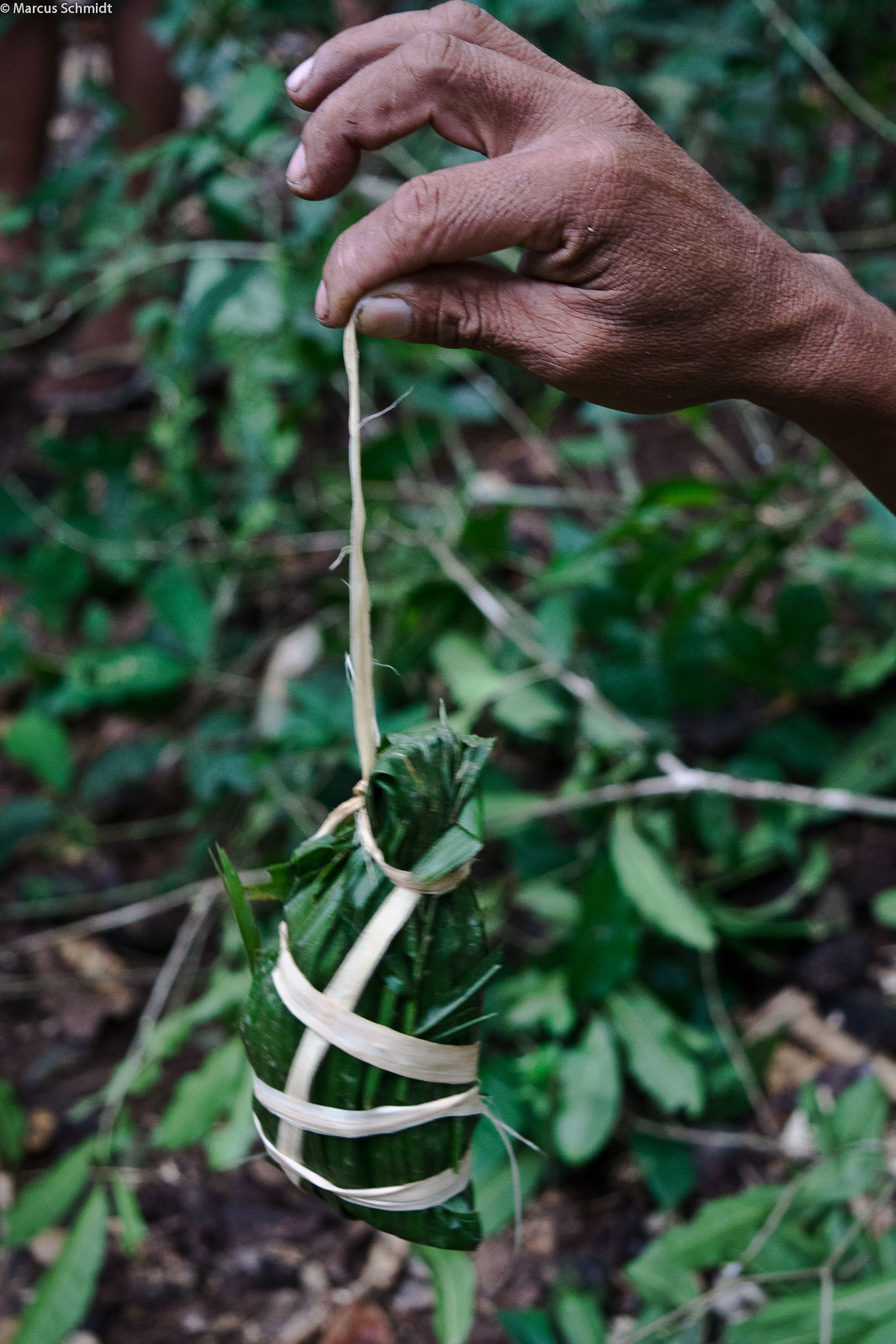 Coleta de sementes florestais T.I Arara - PA