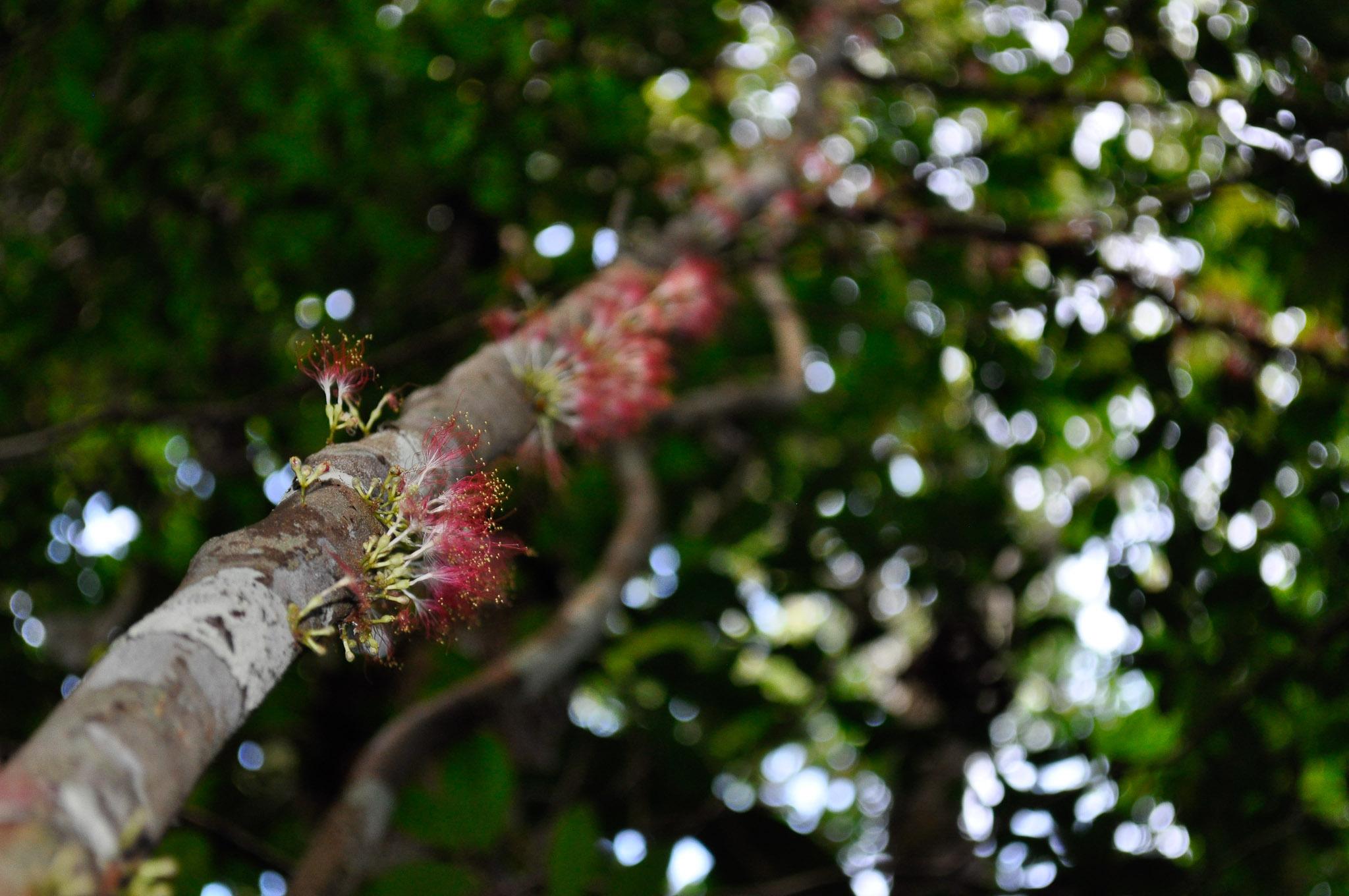 Floresta Alto Rio Negro-AM