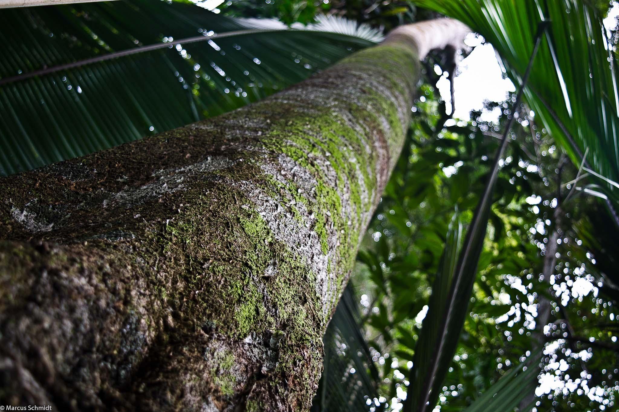 Floresta T.I. Arara - PA