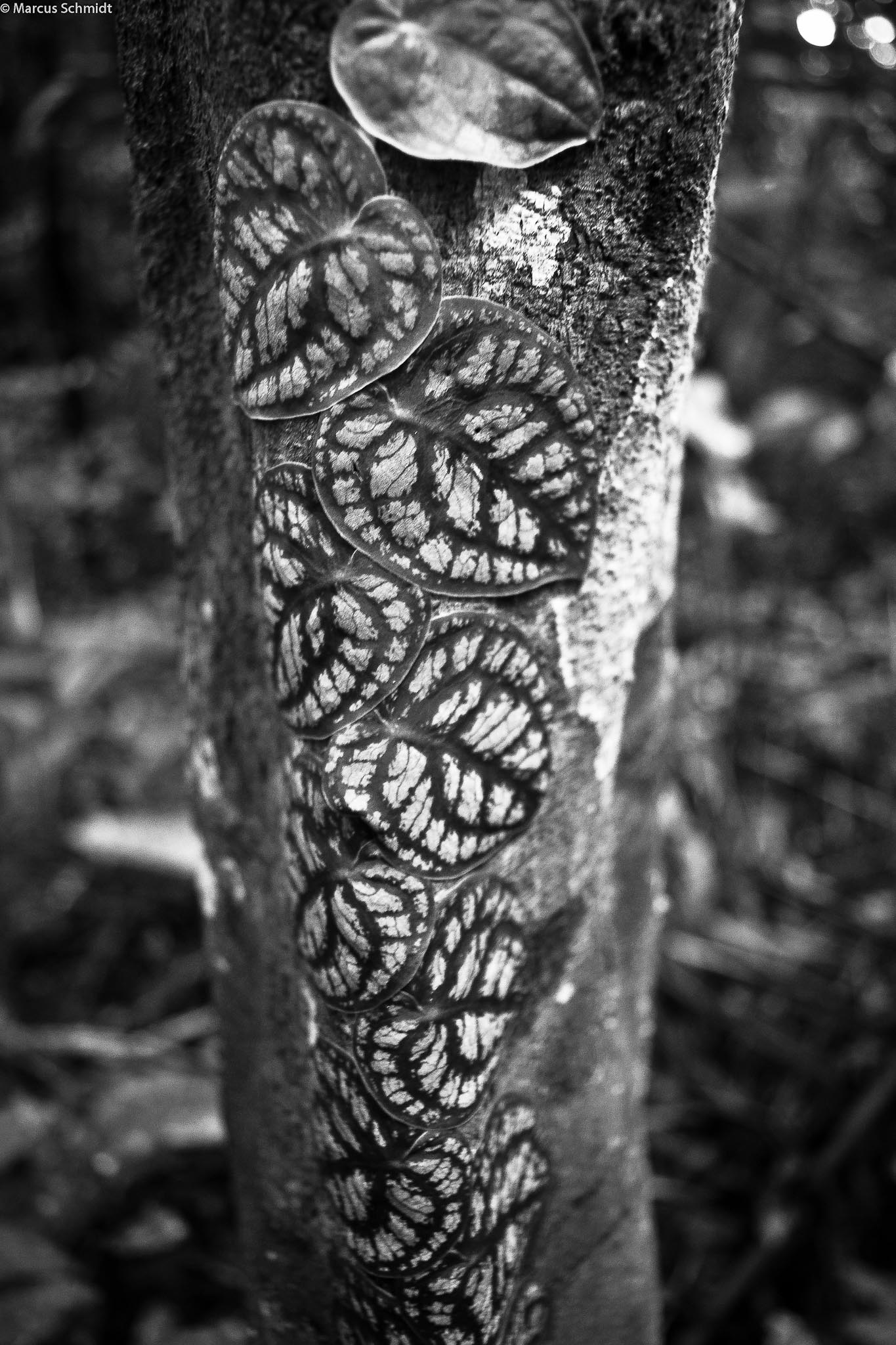 Floresta amazôniaca T.I. Arara-PA