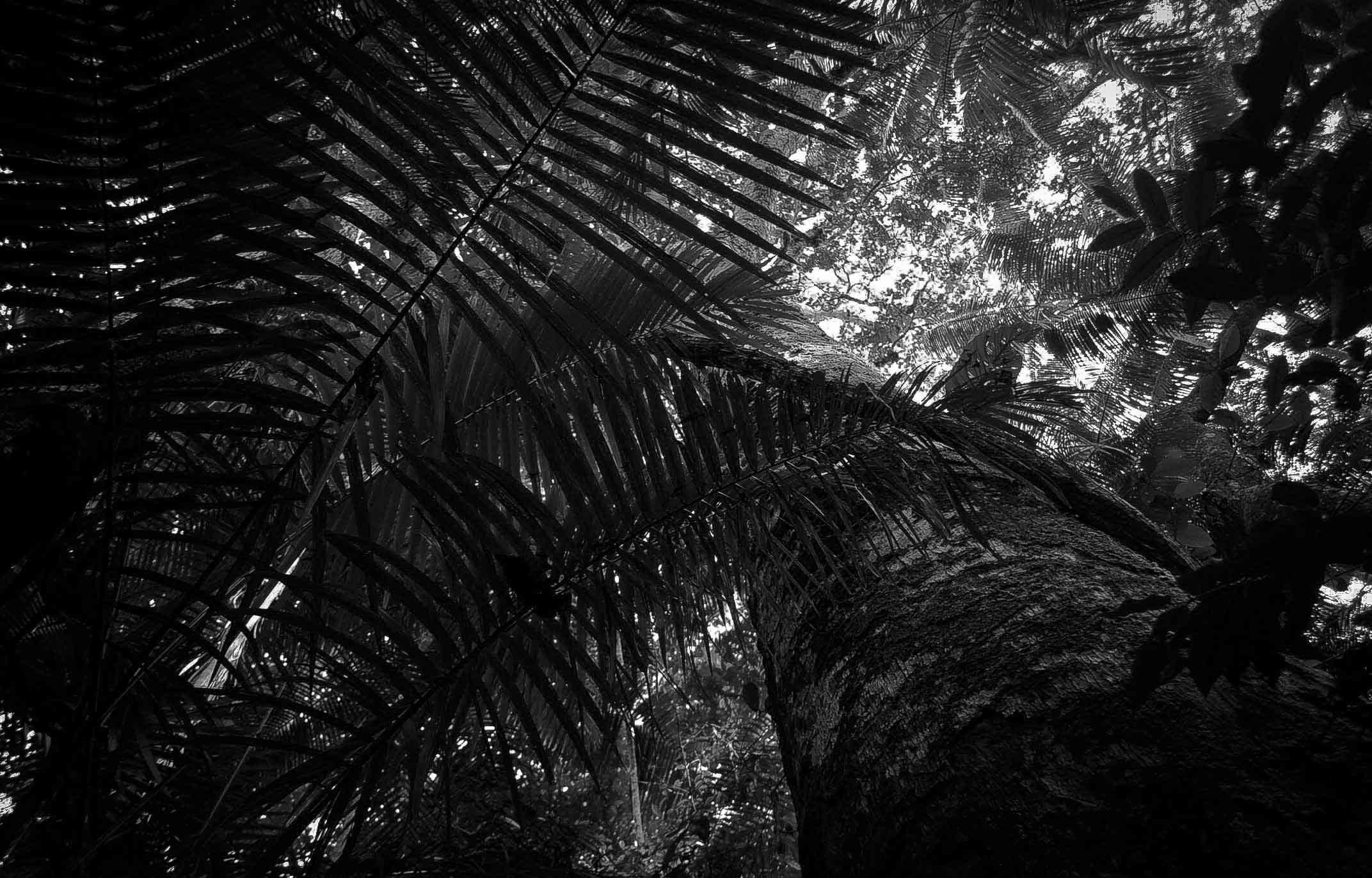 Floresta amazônica T.I Arara-PA