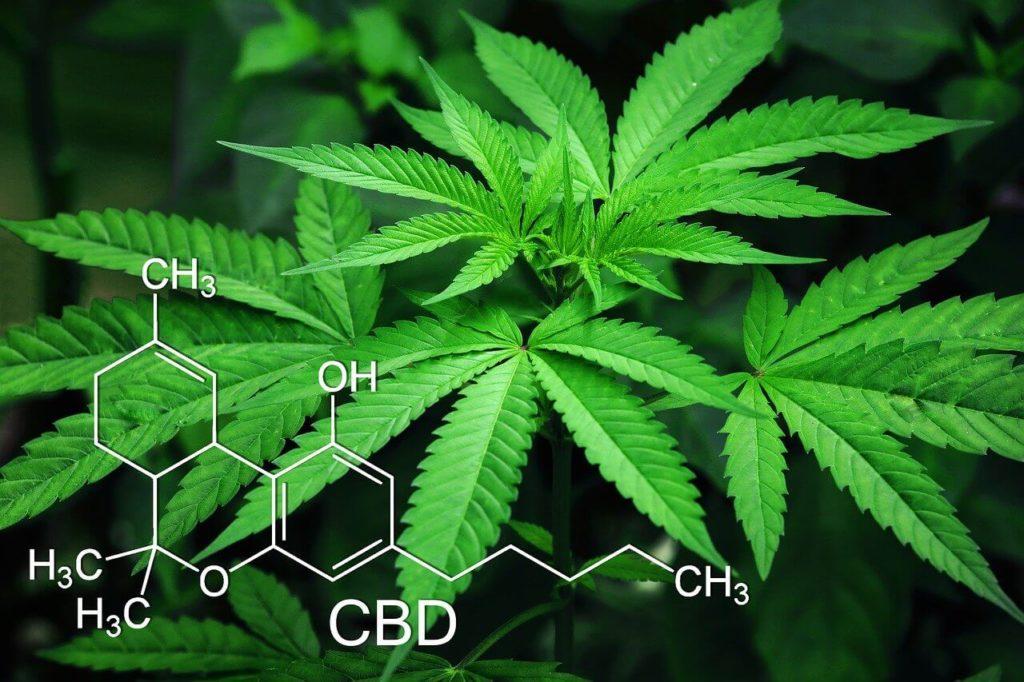 Compostos da maconha e da ayahuasca podem ser usados no tratamento de doenças